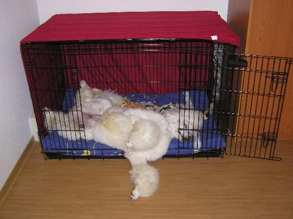bis zu welchem alter nachts in die hundebox seite 2 junghunde der hund. Black Bedroom Furniture Sets. Home Design Ideas